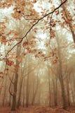 Morgen im Herbst Rote fallende Blätter auf grünem Gras Lizenzfreie Stockfotografie