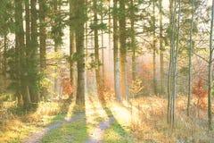 Morgen im Holz Lizenzfreies Stockfoto