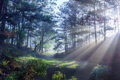 Morgen im Holz Stockfoto