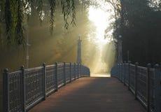 Morgen im Park Stockfotografie