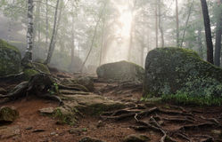 Morgen im tiefen Wald stockfotos