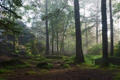 Morgen im tiefen Wald stockfoto