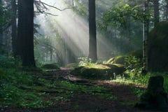 Morgen im tiefen Wald lizenzfreie stockfotografie