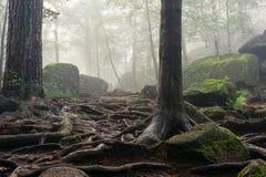Morgen im tiefen Wald lizenzfreies stockfoto