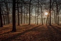 Morgen im Wald Stockfoto