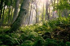 Morgen im Wald stockbild