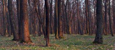 Morgen im Wald Lizenzfreie Stockfotos