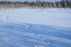 Morgen im Winterwald. Stockbild