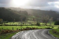 Morgen-Leuchte auf Land Rd NZ stockfotografie