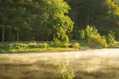 Morgen-Licht, das grüne Bäume mit Misty Lake schlägt lizenzfreie stockfotos