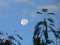 Morgen-Mond Stockfoto