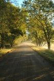 Morgen-Natur-Weg Stockfoto