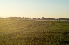 Morgen-Nebel über Feldern Stockfotografie