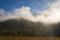 Morgen-Nebel Stockfoto