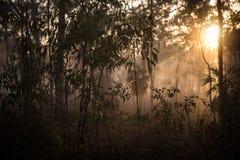 Morgen-Nebel 2 Stockbild