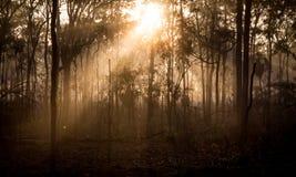 Morgen-Nebel 4 Stockbild