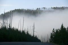 Morgen-Nebel stockfotos