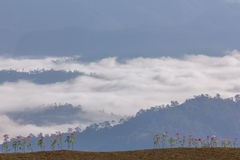Morgen-Nebel und Nebel, die sich langsam vom Standpunkt im Sonnenaufgang am hohen Berg in Chiangmai, Thailand bewegen Stockfoto