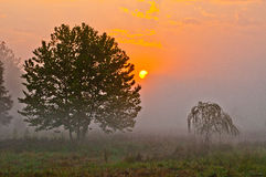 Morgen Nebel und Sun Lizenzfreies Stockfoto