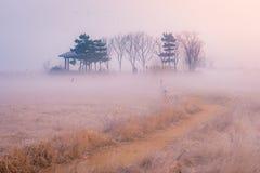 Morgen-Nebelgraslandgras hohes Grasgrasland des Herbstes im Nebel Lizenzfreie Stockbilder