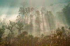 Morgen nebelhaft in der Herbstwaldlandschaft Stockfotos
