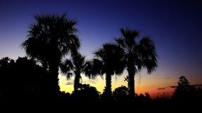 Morgen-Palmen Stockfotos