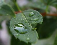 Morgen-Regen Stockfoto