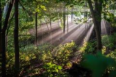 Morgen-Sonnendurchbruch Stockfotos
