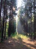 Morgen-Sonnenstrahlen Stockfoto
