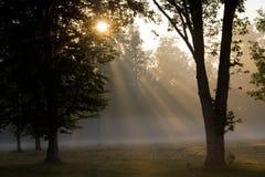 Morgen-Strahlen und Bäume Stockbild