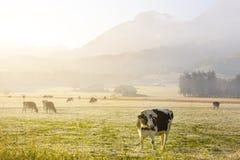 Morgen in suisse Alpen Stockbild