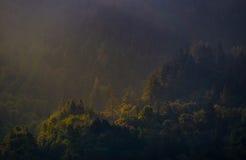 Morgen Sun auf dem Wald Stockfotografie
