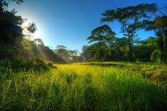 Morgen Sunbeams in der Naturlandschaft Lizenzfreies Stockbild