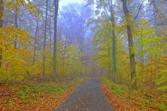Morgen-Tau in Autumn Forest Stockbilder