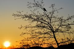 Morgen-Vogel Lizenzfreie Stockfotografie