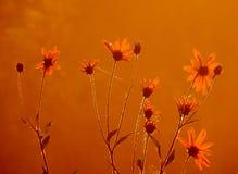 Morgen Wiesenblumen an der Dämmerung Stockfotografie