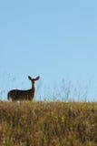 Morgen-wild lebende Tiere lizenzfreies stockbild