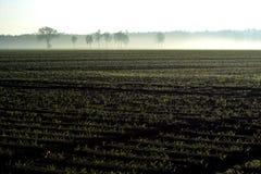 Morgenfrühlingslandschaft mit eben gepflogenem Feld mit jungen Mais sprounts, Ackerland in den Niederlanden, Europa lizenzfreie stockfotos