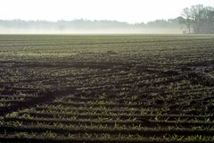 Morgenfrühlingslandschaft mit eben gepflogenem Feld mit jungen Mais sprounts, Ackerland in den Niederlanden, Europa stockfotos