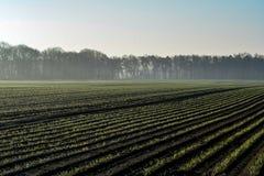 Morgenfrühlingslandschaft mit eben gepflogenem Feld mit jungen Mais sprounts, Ackerland in den Niederlanden, Europa stockbild
