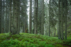 Morgenfrische des Waldes Stockfoto