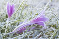 Morgenfrost Stockbild