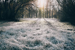 Morgenfrost auf dem Gras lizenzfreie stockbilder