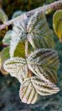 Morgenfrost auf gelbem Herbstlaub Lizenzfreies Stockfoto