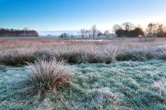 Morgenfrost auf Sumpf im Winter lizenzfreie stockfotos