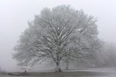 Morgenfrost in Großbritannien stockfotografie