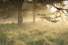 Morgengoldsonnenschein am nebeligen Morgen lizenzfreie stockbilder