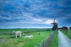 Morgenhimmel über niederländischem Bauernhof mit Windmühle und Ziege Stockfotos