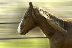 Morgenlack-läufer Stockfoto
