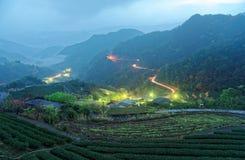 Morgenlandschaft von Teegärten in der tiefen blauen Dämmerung vor Dämmerung mit schönen Lichtern vom Dorf im Tal Lizenzfreies Stockfoto